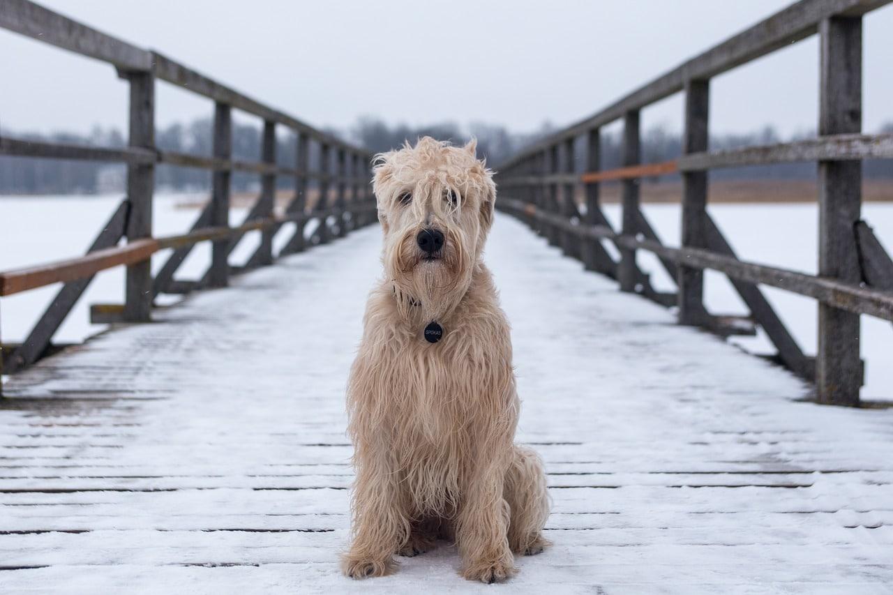 dog, animal, canine