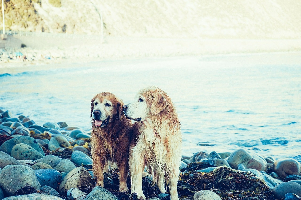 dogs, beach, coast
